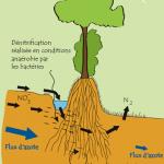 Rôle_du_bocage_-_fonctions_épuratives