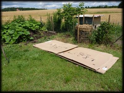 La culture en lasagne : le jardinage facile, écologique et pas cher !