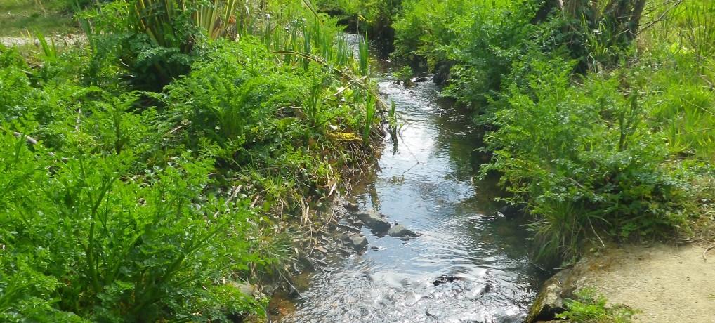 Jusqu'au 6 décembre, Donnez votre avis sur la lutte contre la pollution de l'eau