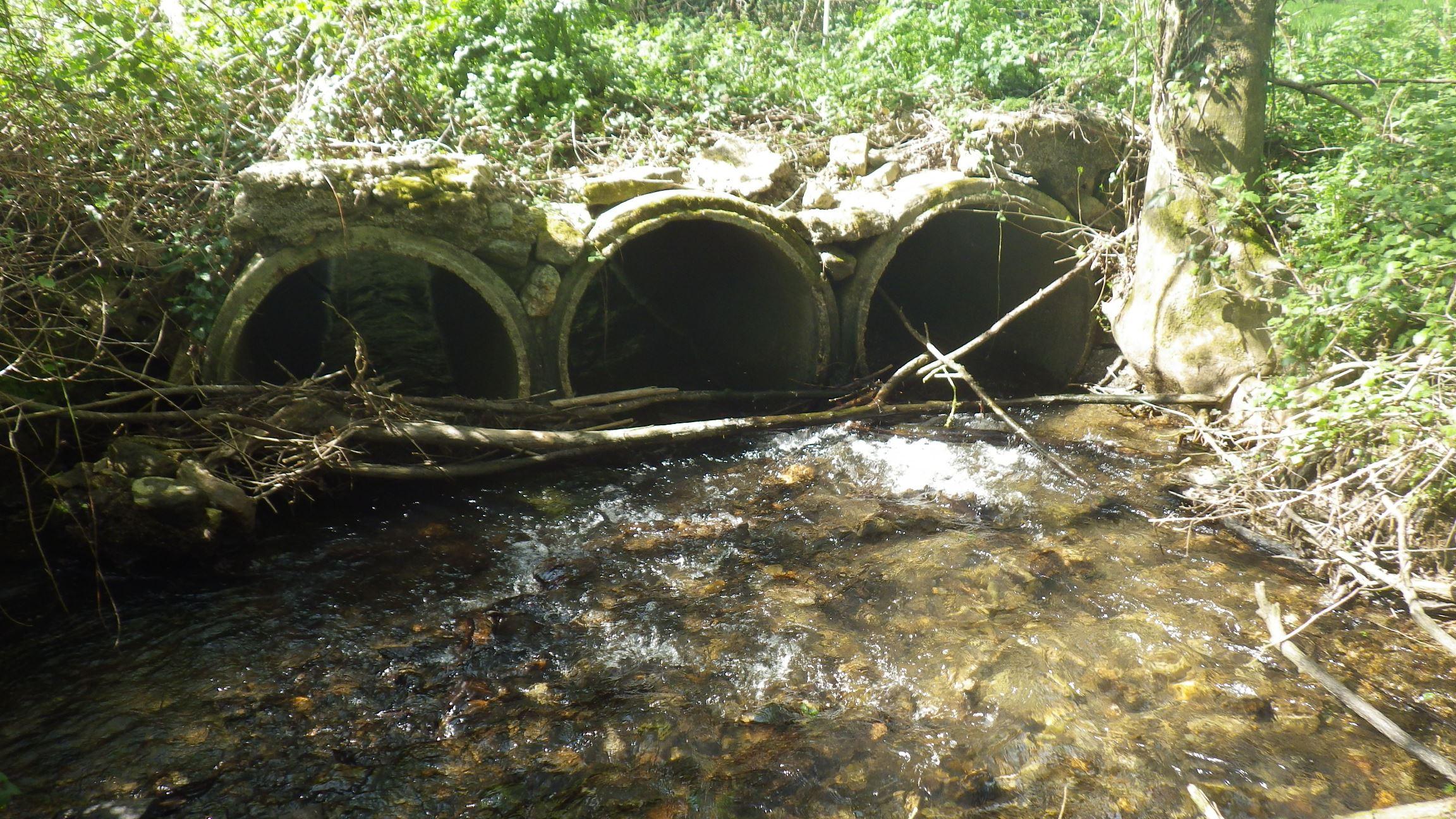 Site de rencontre écologique