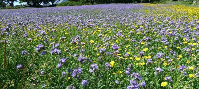 Chantiers collectifs de semis précoces de couverts végétaux