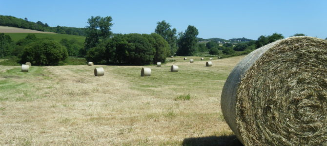 Bulletin d'information agricole – Juin 2020